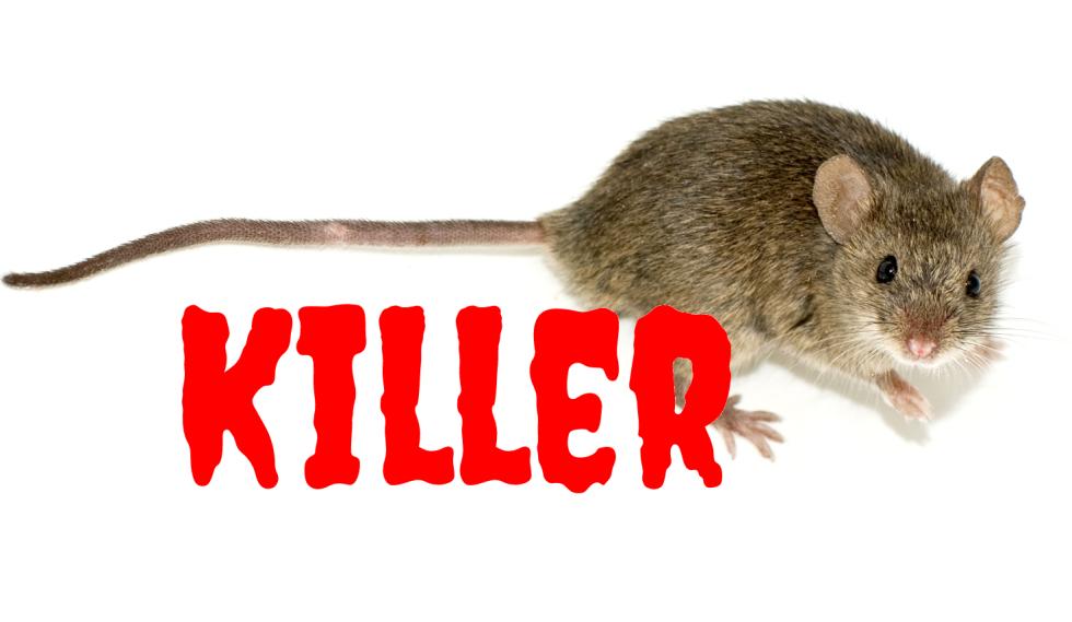 killer-mouse